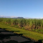 Canefields (2)